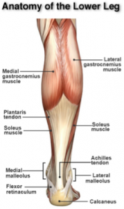Achilles Tendon Tears1